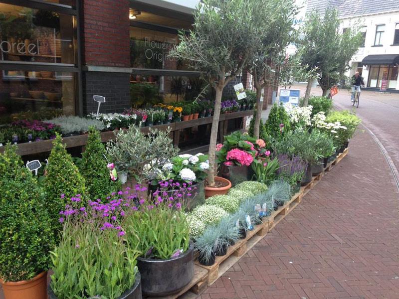 Floreel Bloemen & planten